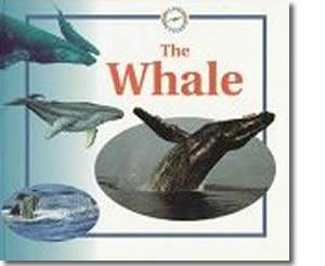 The Whale (Life Cycles) - Alaska Books for Kids