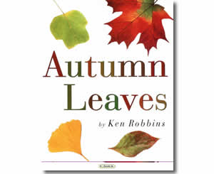 Autumn Leaves - Fun Fall Books for Kids