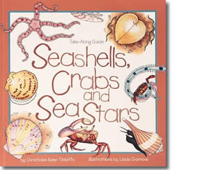 Seashells, Crabs, and Sea Stars  - Summer Books for Kids